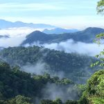 Celebrating International Day of Forests – 21st March