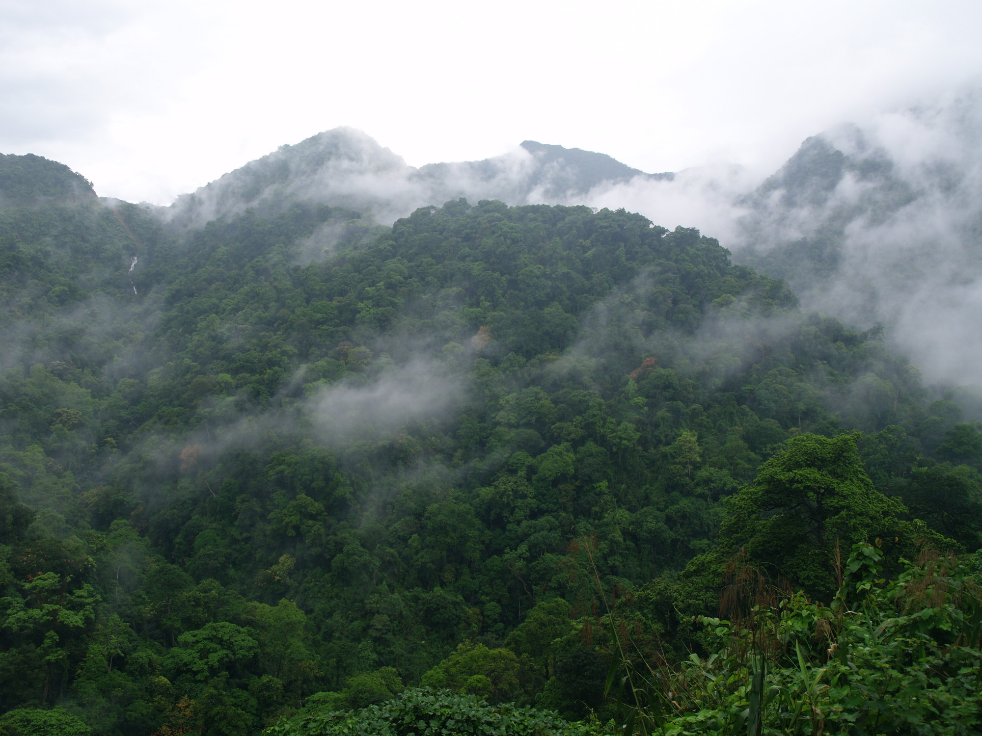 Khe Nuoc Trong Forest