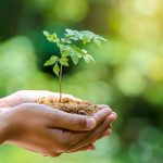 The truth about tree planting